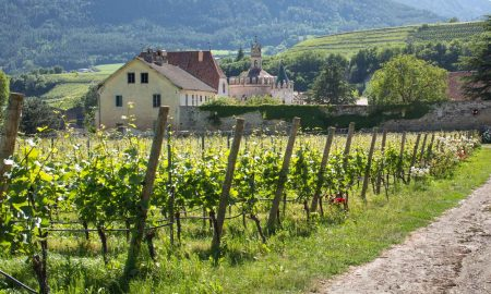 Vineyards of Kerner and Pinot Grigio with the Engelsburg in the distance. ©Kevin Day/Opening a Bottle