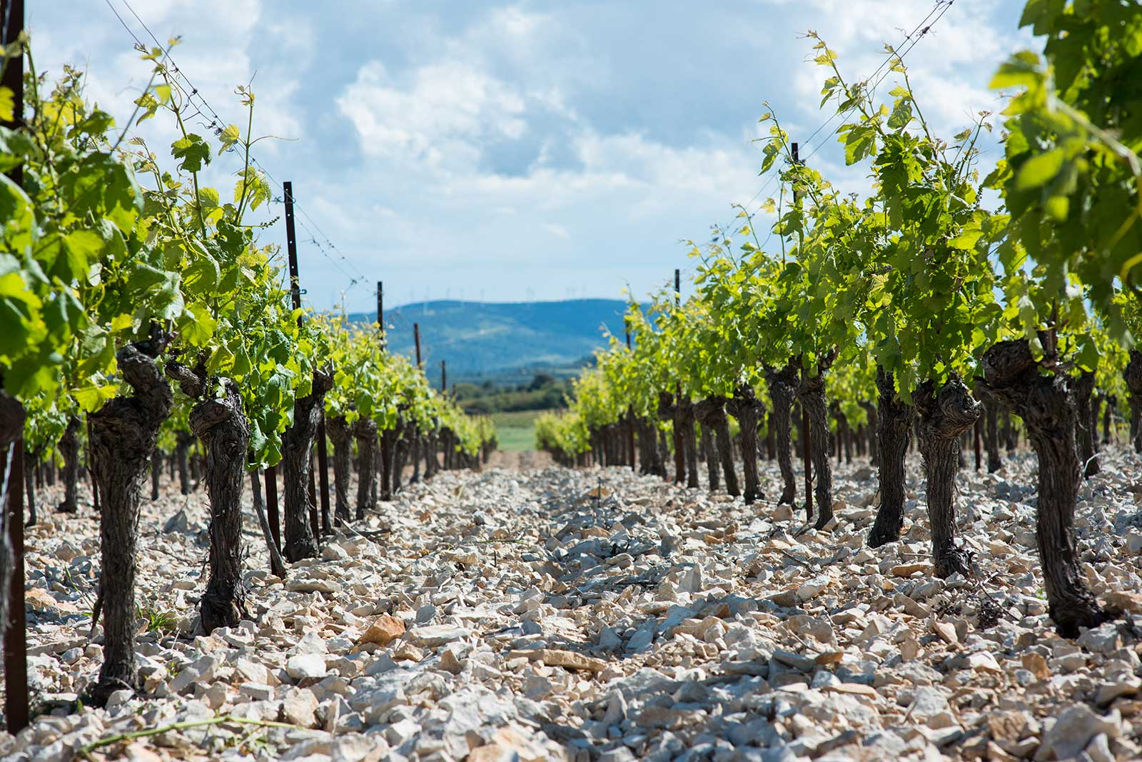 Crushed rocks and tree trunks — the unique setting of Domaine Anne Gros & Jean-Paul Tollot's old-vine vineyards. ©Domaine Anne Gros & Jean-Paul Tollot