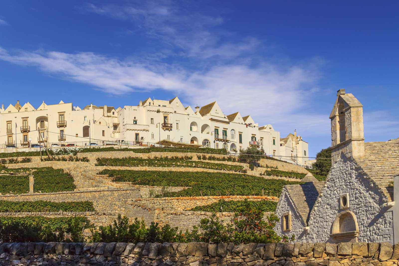 The town of Locorotondo surrounded by vineyards in the heart of Puglia.