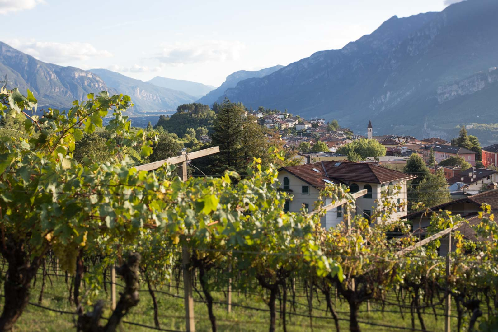 A view over the pergola-trained vines at Maso Martis, an organic and family-owned estate in Trentodoc, Trento, Italy. ©Kevin Day/Opening a Bottle