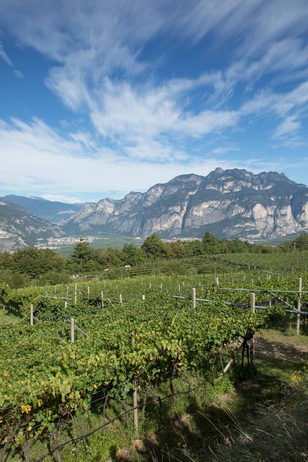 A view over the Campo Rotaliano from the Sette Fontane vineyard. Imagine this valley filled with a giant glacier, and you get a sense for how it was carved. ©Kevin Day/Opening a Bottle