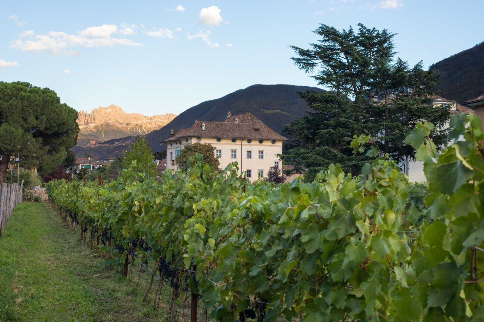 Lagrein vineyards in the city of Bolzano with the Rosengarten group of the Dolomites in the distance. ©Kevin Day/Opening a Bottle