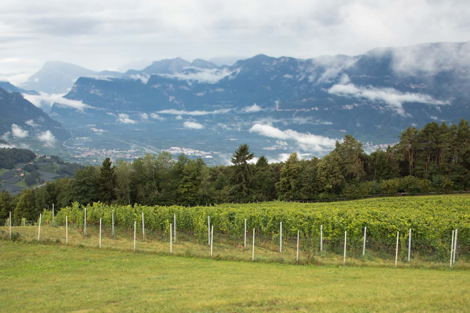 As climate change forces vineyard plantings higher and higher into the mountains, whose place do they take: pastureland or forest? And what are the impacts? ©Kevin Day/Opening a Bottle