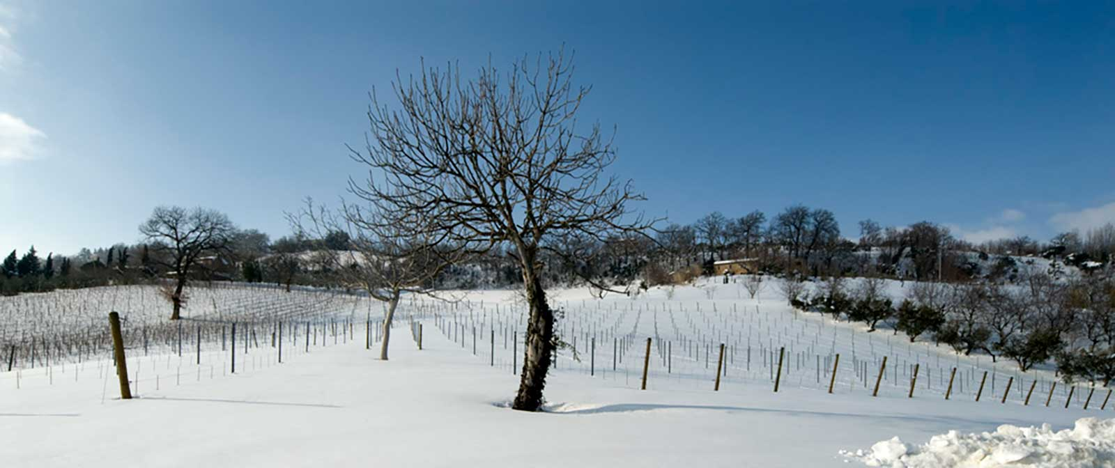 A wintertime view of La Marca di San Michele's vineyards. ©Kermit Lynch Wine Merchants