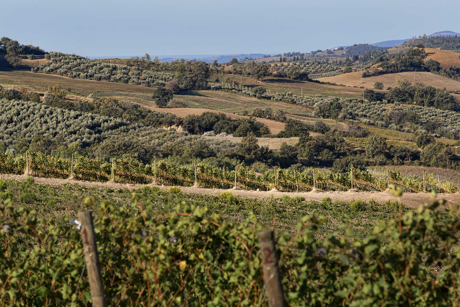 A view over the vineyards of Montecucco in Italy's Tuscany region. ©Consorzio Tutela Vini Montecucco