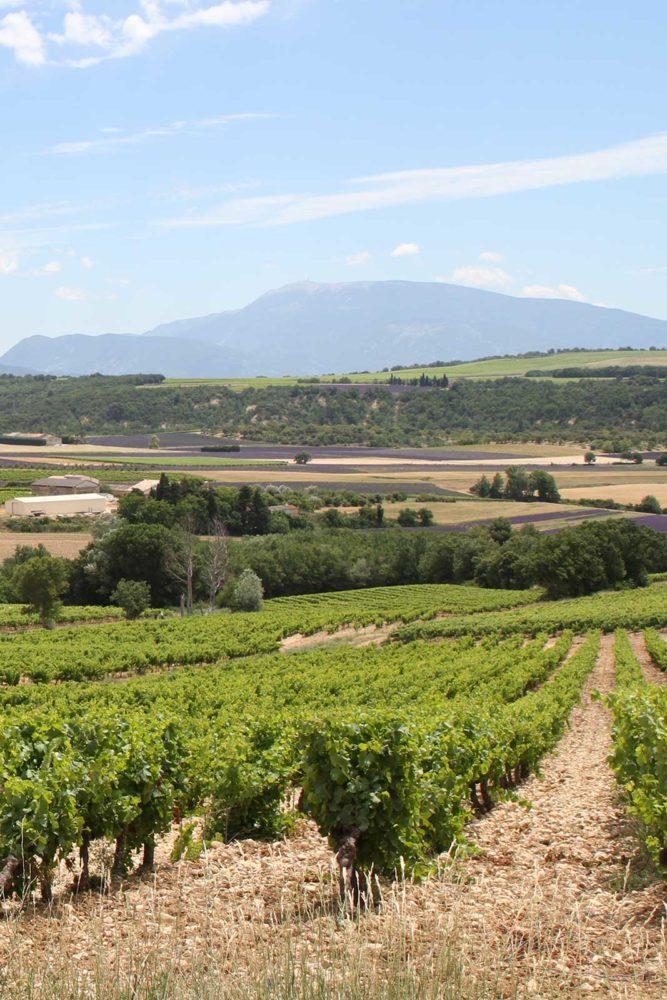 The high-elevation vineyards of Clos Bellane in the Côtes du Rhône Villages Valréas AOC in the Southern Rhône of France. ©Skurnik Wines