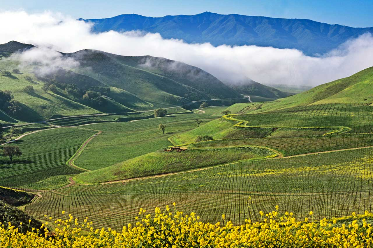 A view over the rolling hills of Santa Barbara County. The variety of exposures, soil types and microclimates make it a complex ecosystem for Pinot Noir — one Thomas is just now getting a handle of. ©Star Lane Estate