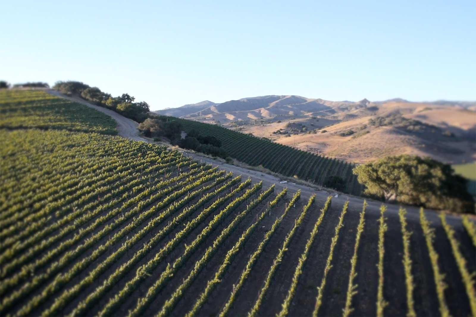 One of the Pinot Noir vineyards at Dierberg Estate. ©Star Lane Estate