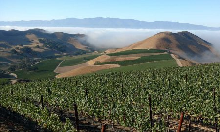 The vineyards at Dierberg Estate. ©Star Lane Estate