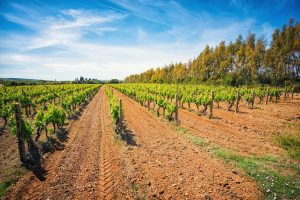 First-Taste Guide to Cannonau di Sardegna
