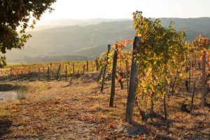 Slow Wine Tour: A Showcase of Italian Wine's Golden Age