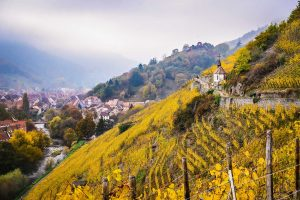 The Grand Cru Rangen de Thann: A Vineyard's Story