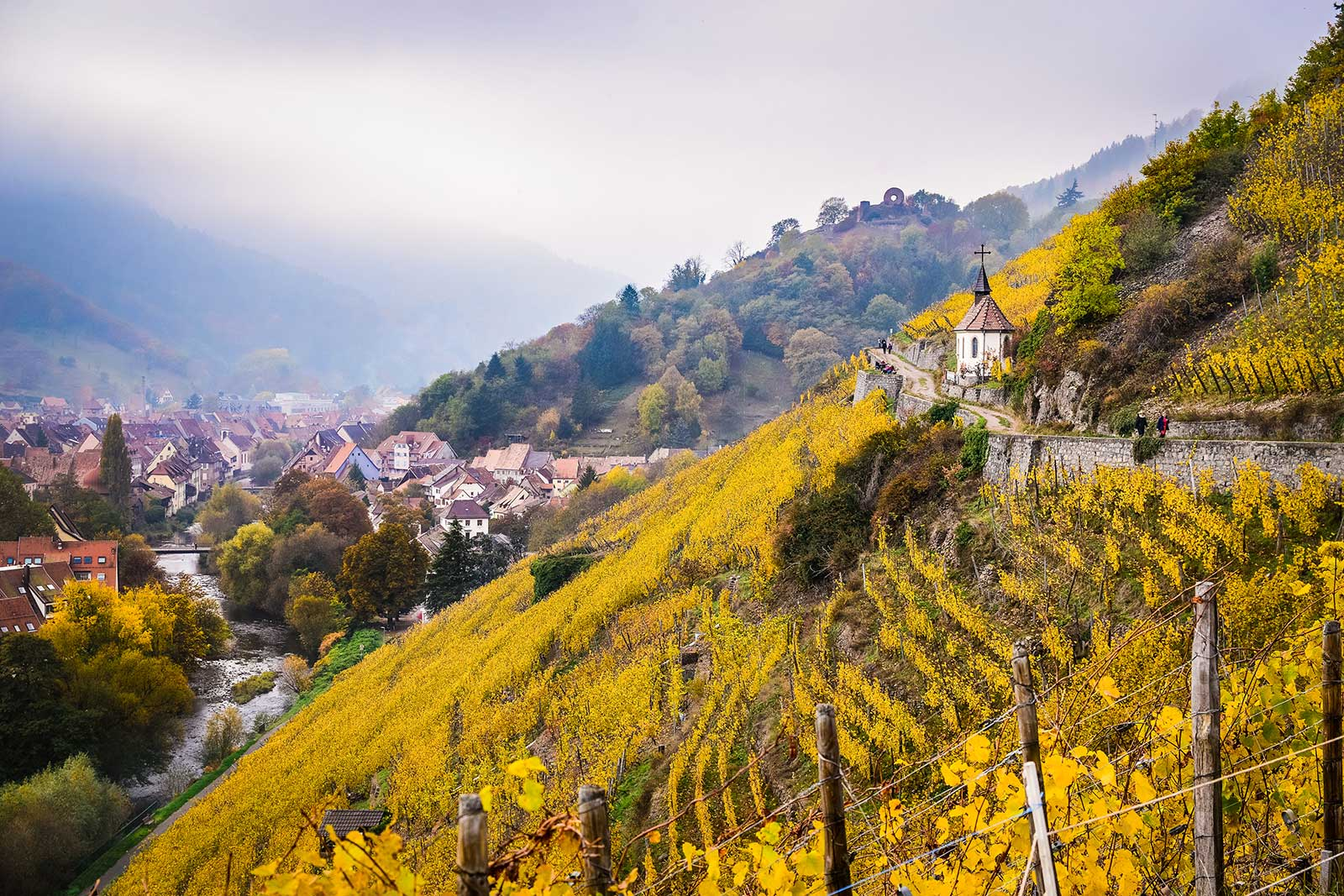 The Grand Cru Rangen de Thann in Alsace. ©Adobe Stock Photo