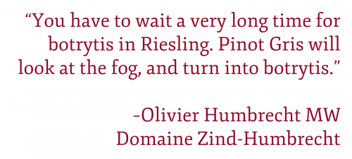 "Pullquote: ""You have to wait a very long time for botrytis in Riesling. Pinot Gris will look at the fog, and turn into botrytis."" -Olivier Humbrecht MW, Domaine Zind-Humbrecht"
