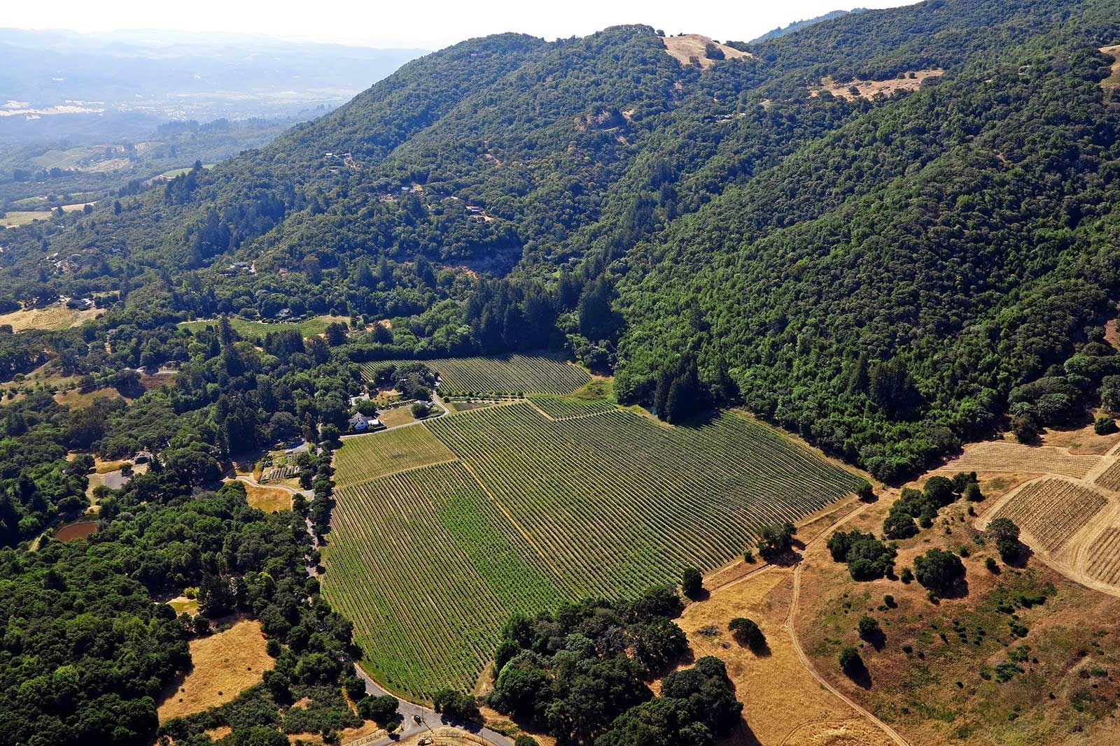 An aerial view of the Van Der Kamp Vineyard in Sonoma, where La Pitchoune sources some of their Pinot Noir Grapes. ©La Pitchoune