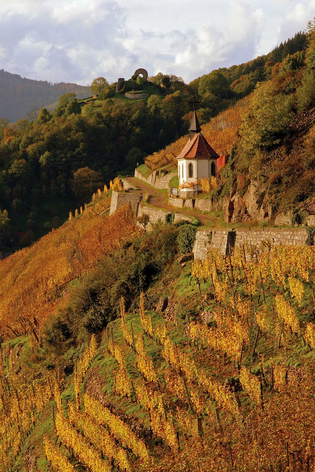 The Clos Saint Urbain within the Grand Cru Rangen de Thann is one of the most prized vineyards in all of France, and Domaine Zind-Humbrecht owns all of it. ©Domaine Zind-Humbrecht