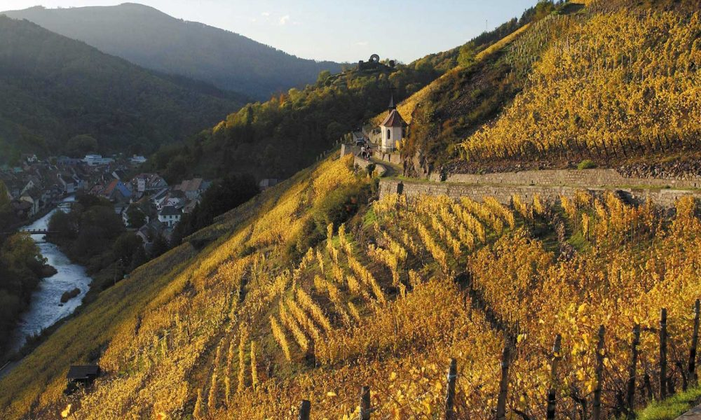 The Grand Cru Rangen de Thann in Alsace.©Frantisek Zvardon – Conseil Vins Alsace