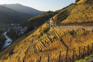 Essential Winemakers of France
