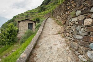 Essential Winemakers of Italy