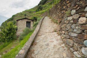 First-Taste Guide to Valtellina Superiore