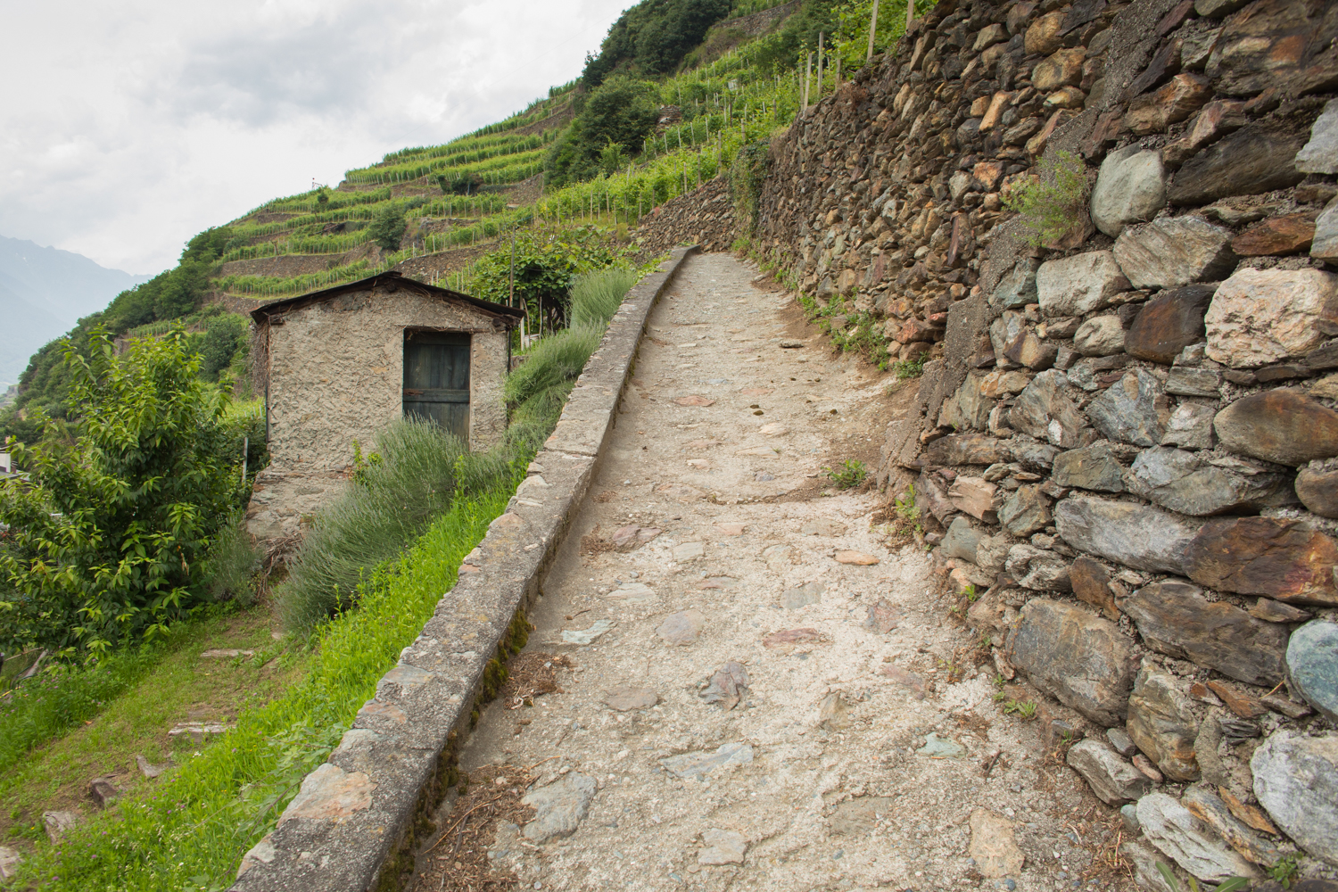 The Road Into Sassella of Valtellina ©Kevin Day/Opening a Bottle