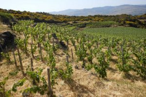 Four Wines from Passopisciaro of Sicily's Etna