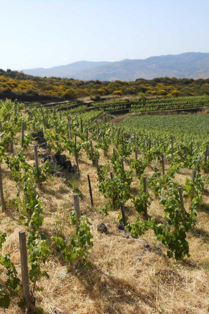 A view over Passopisciaro's vines and the Guardiola contrada. ©Passopisciaro