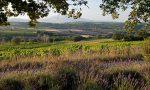 The vineyards of Clos Bellane. ©Skurnik Wines/Clos Bellane