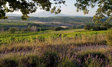 The vineyards of Clos Bellane. ©Skurnik Wines/Clos Bellane