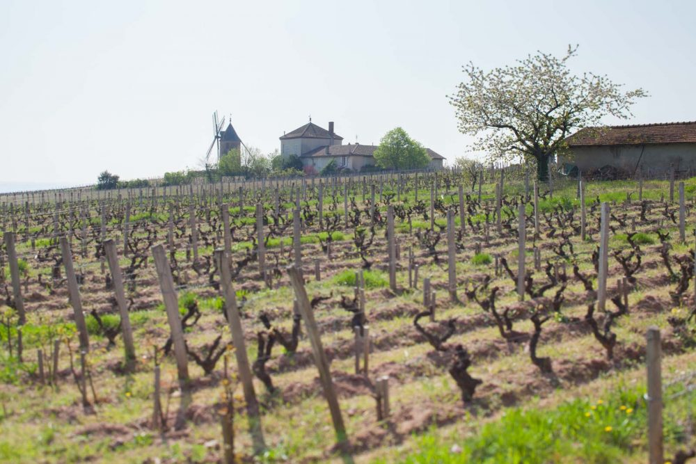 A view over Le Moulin-à-Vent, the château's monopole plot of old-vine Gamay that goes toward Clos de Londres. ©Kevin Day/Opening a Bottle