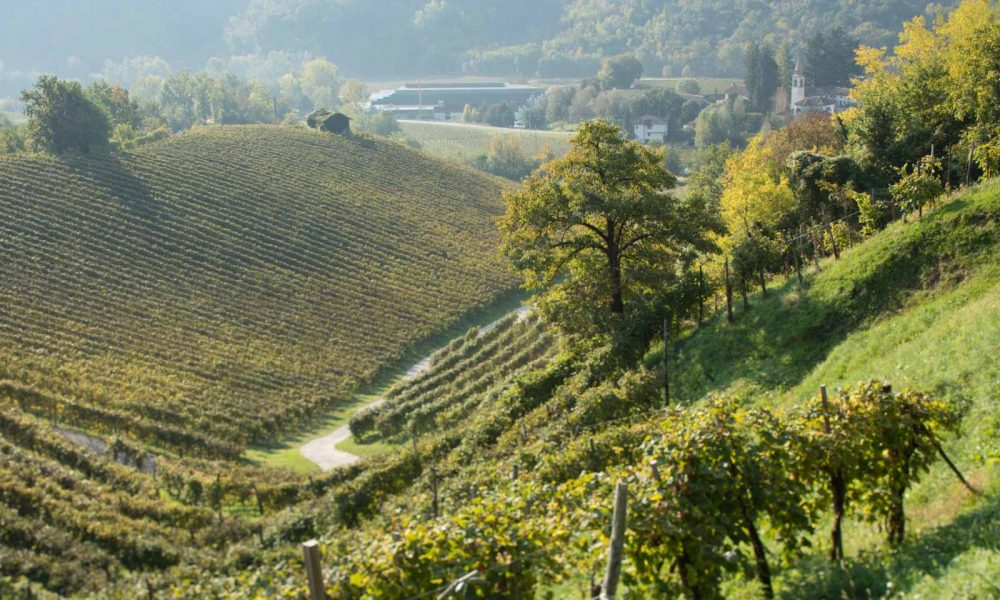 Organic and heroic vines in Valdobbiadene, the heart of the Prosecco region of Veneto. ©Kevin Day/Opening a Bottle