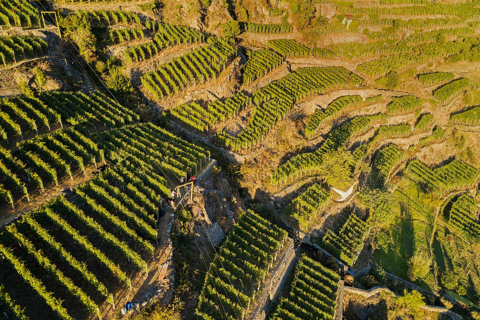 The terraces of Sassella in Valtellina. Are you dizzy yet?