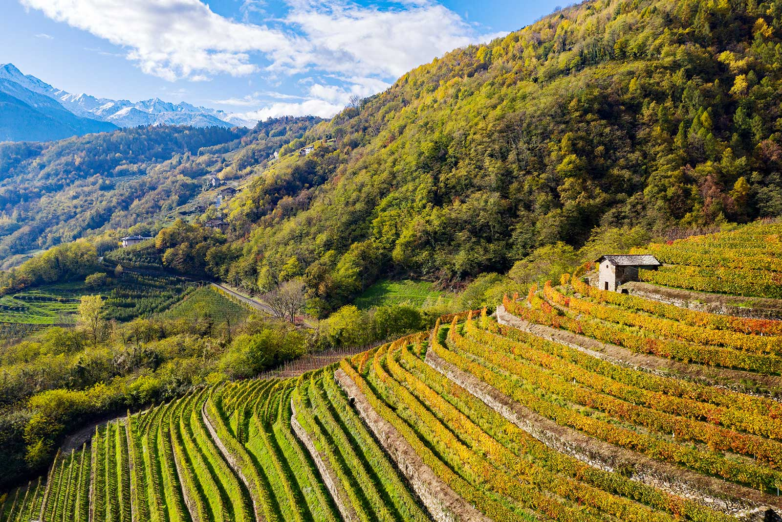 The terraced vineyards of the Bianzone commune in Valtellina, Lombardy, Italy.