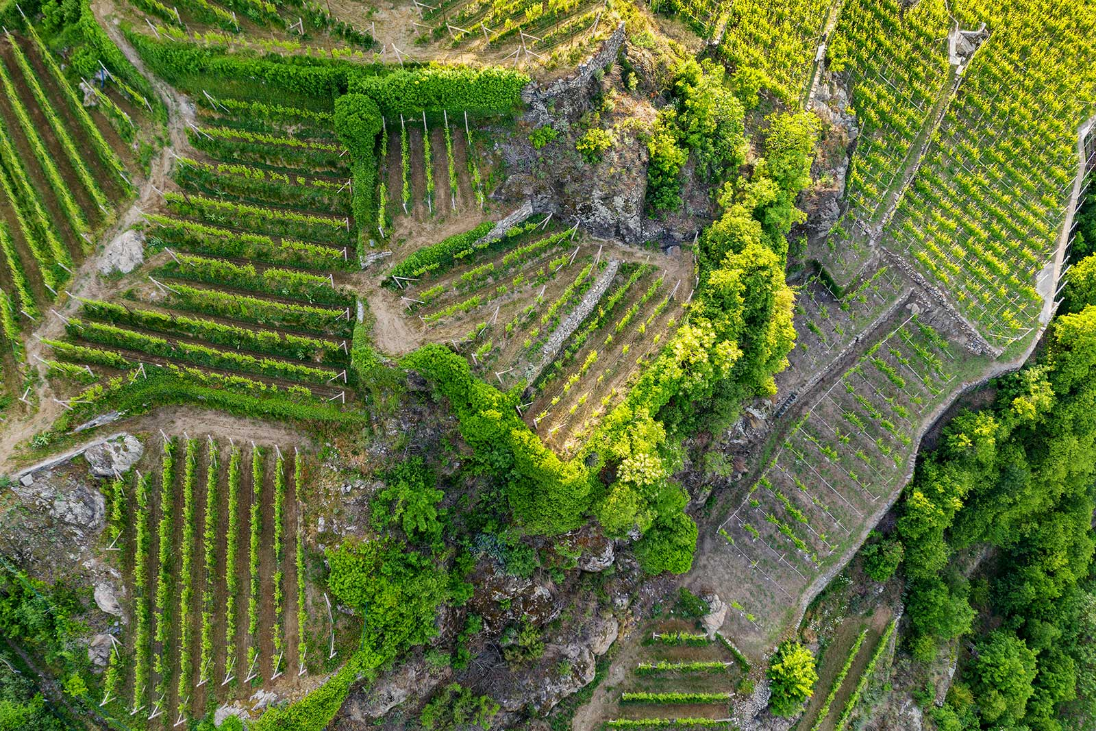 "The jumbled terraces of Valtellina are Exhibit A of ""heroic viticulture."""