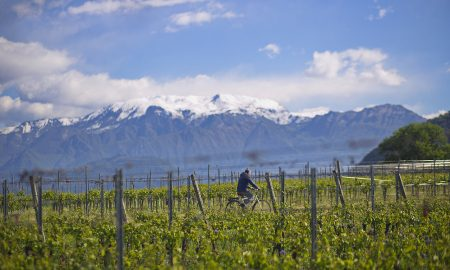 Leonardo Valenti, enologist at Barone Pizzini, rides his bike through the vineyards
