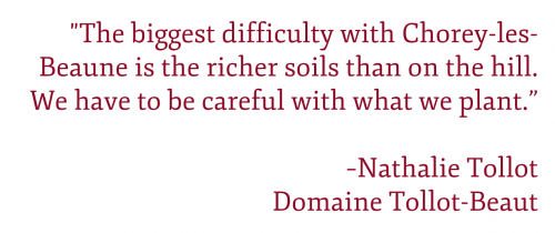 "Pull Quote: ""The biggest difficulty with Chorey-les-Beaune is the richer soils than on the hill. We have to be careful with what we plant."" –Nathalie Tollot, Domaine Tollot-Beaut"