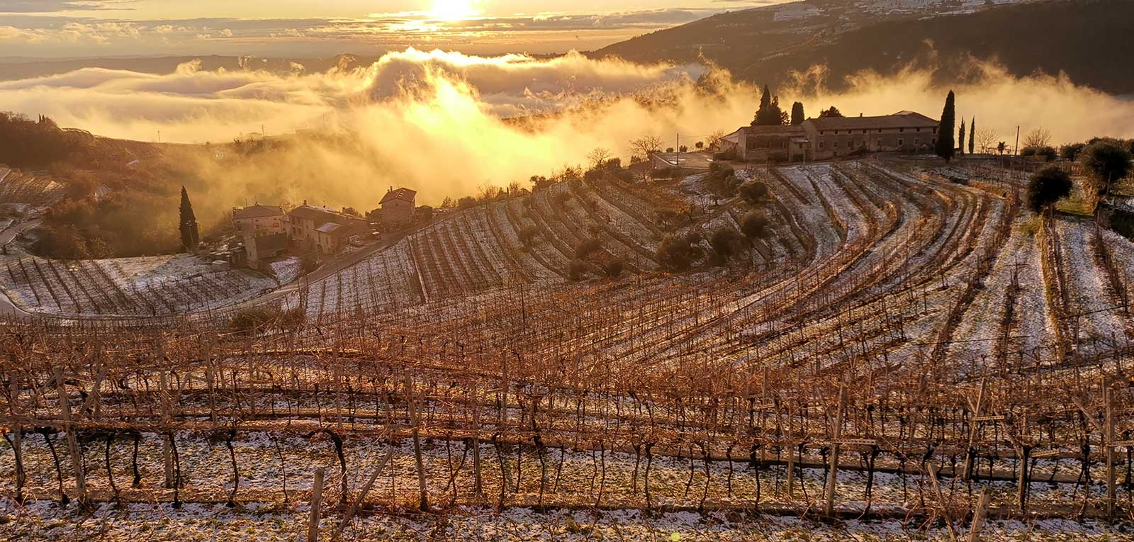 Valpolicella in winter, when the cold air dissects grapes set aside for Amarone della Valpolicella production.