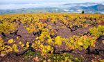 Vineyards in the Cru of Chiroubles, Beaujolais, France.