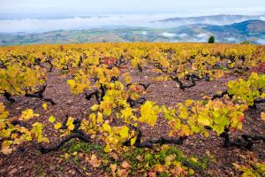 Wine for a Pandemic Thanksgiving: It's Still Beaujolais