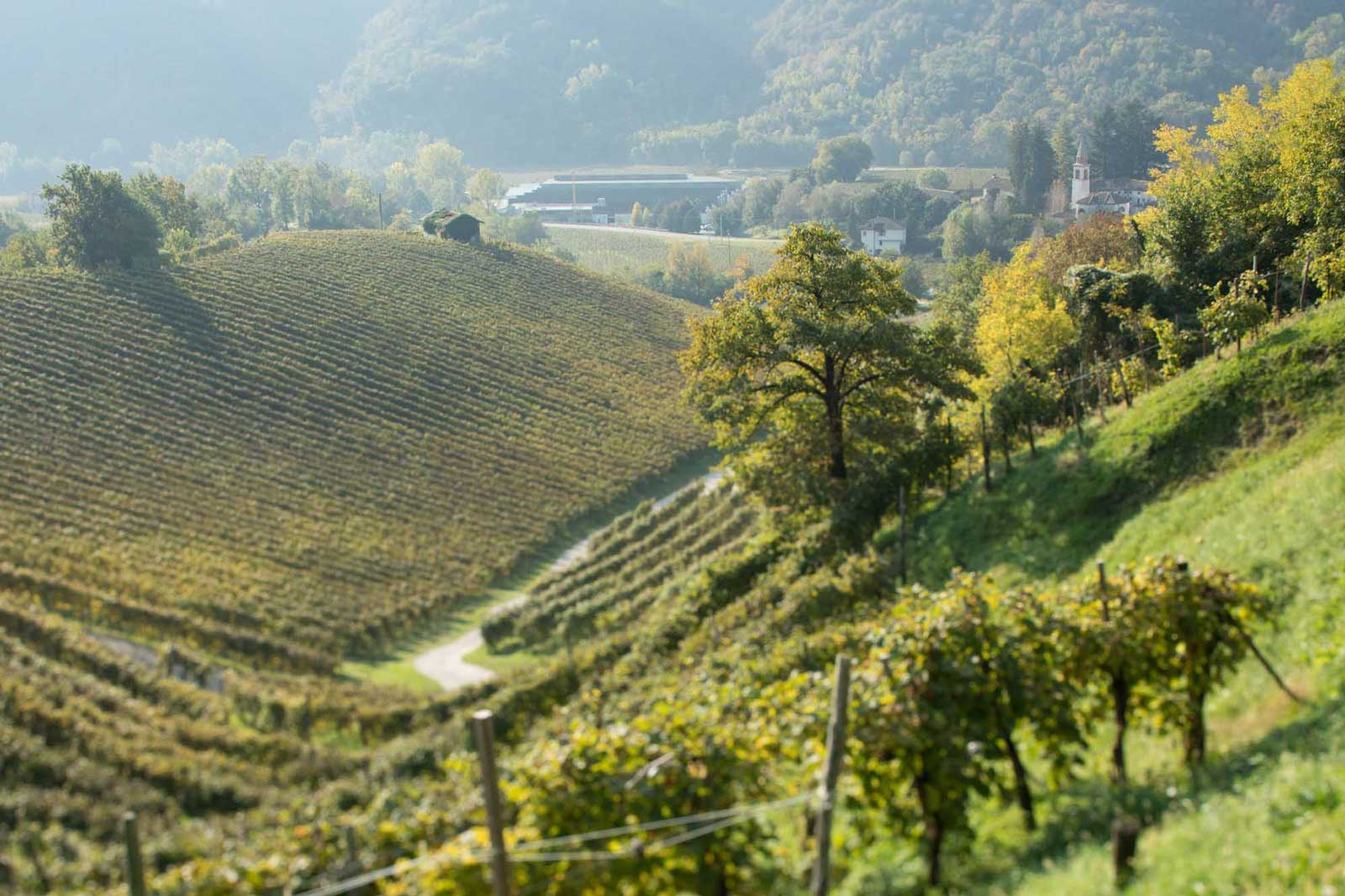 A view over the Rive di Campea near Valdobbiadene, Italy. ©Kevin Day/Opening a Bottle