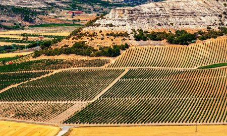 A view over the vineyards near Penafiel in the heart of Ribera del Duero.