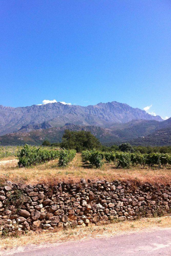Looking over the vineyards of Domaine Maestracci in Corsica's northwestern subzone of Calvi. ©Kermit Lynch Wine Merchants