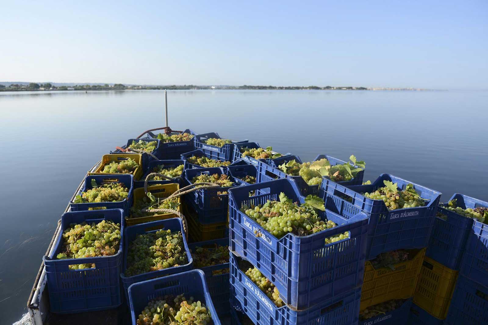 Bringing the grapes in from Mozia Island, Sicily. ©Tasca d'Almerita
