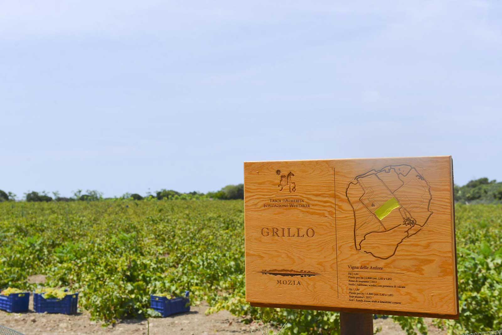 The Grillo vineyard on Mozia comprises 12 of the 40 hectares on the island. ©Tasca d'Almerita