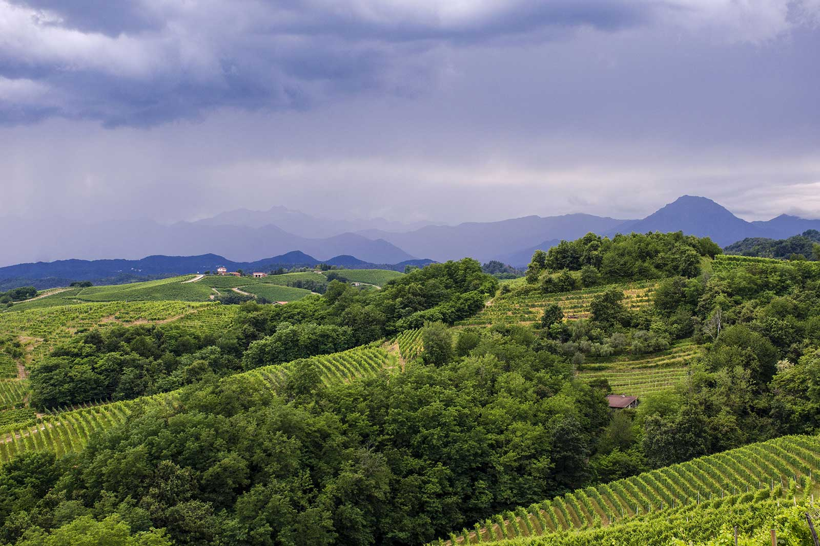 The rolling hills of Alto Piemonte with the Italian Alps in the distance. (Stock photo)
