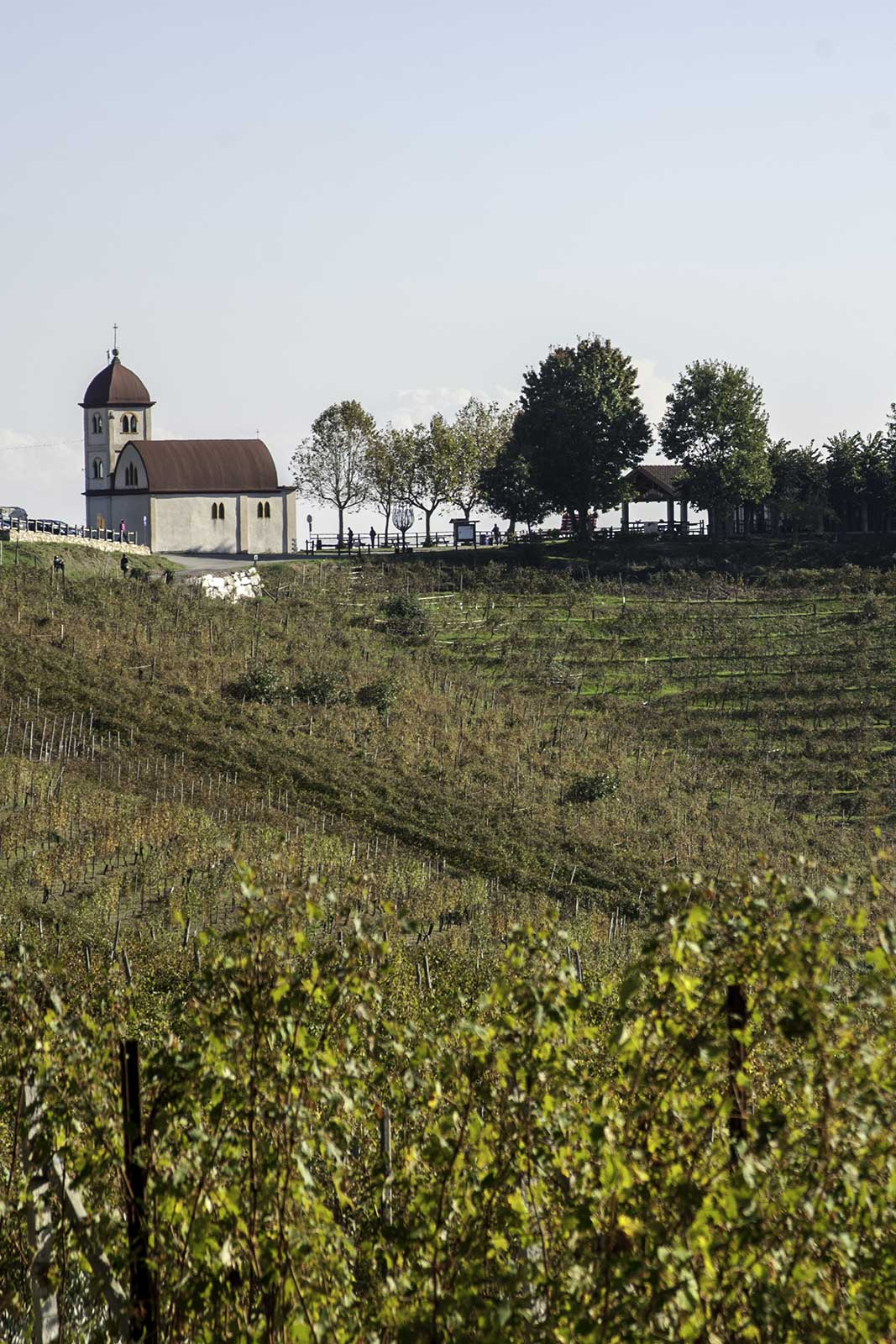 The prized Castelle vineyard of Gattinara, where some of Petterino's holdings are found. Stock image.