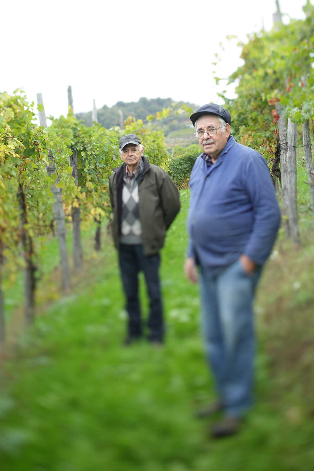 Giancarlo (left) and Marco Petterino (right) among their vines in Gattinara. ©Clay McLachlan/claymclachlan.com for Polaner Selections