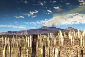 First-Taste Guide to Etna Rosso