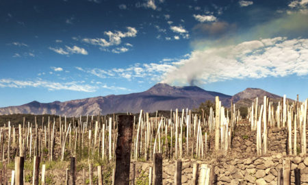 Mount Etna smolders behind rows of grapevines in the Etna DOC. ©Benanti
