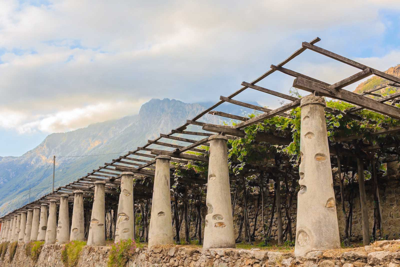 The stone columns that hold up the pergola vines of Carema's terraced vineyards. Stock photo.